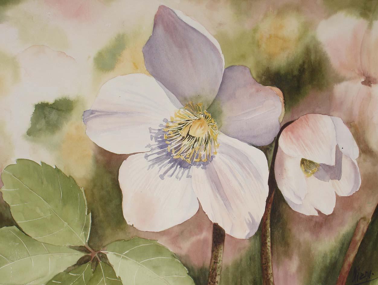 Fleurs aquarelle - Rose de noel en pot ...